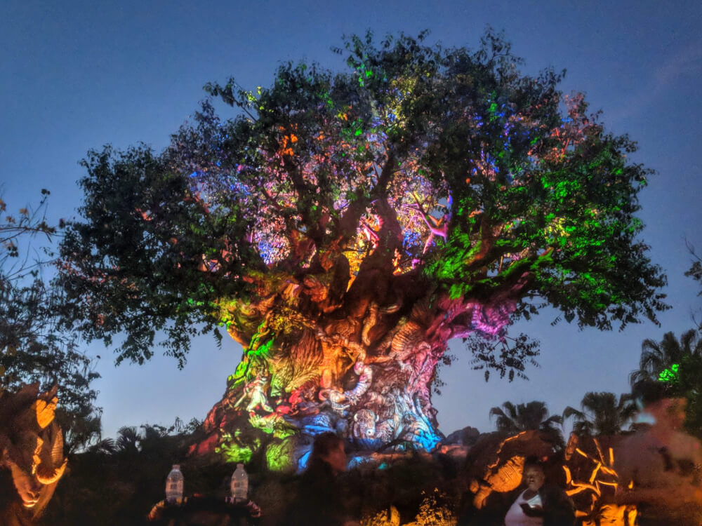 animal kingdom at night