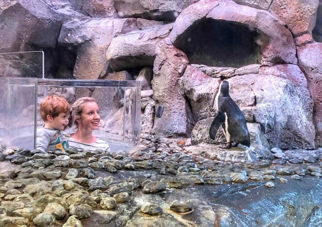 things to do in Atlanta with kids