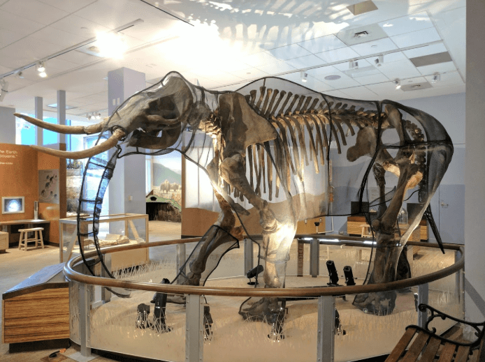 Museums for Kids in the United States